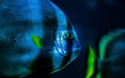 Обои Полосатая рыба крупным планом