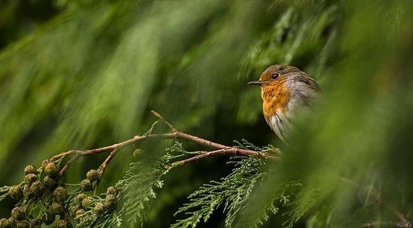 Обои Птица на ветке дерева, by EncroVision
