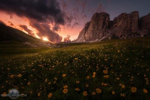 Обои Цветочная долина в горах, фотограф Isabella Tabacchi
