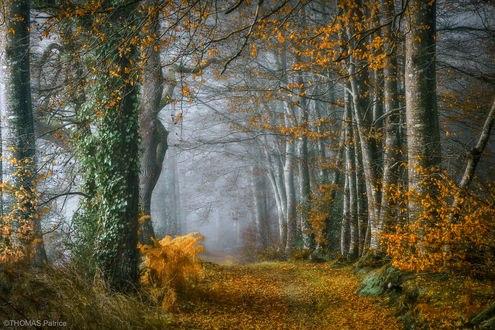 Обои Осенняя дорога в лесу, фотограф Patrice Thomas