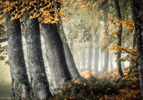 Обои Осеннее утро в лесу, фотограф Patrice Thomas