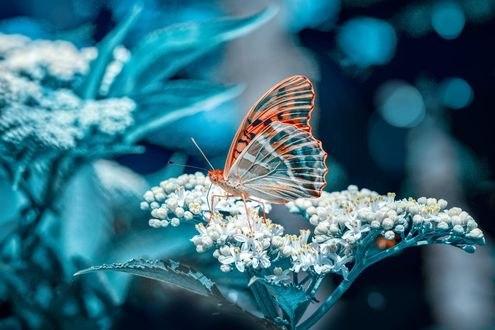 Обои Бабочка сидит на цветке, фотограф Mustafa ОztГјrk