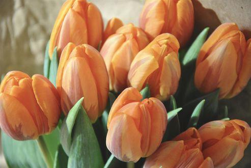 Обои Букет оранжевых тюльпанов
