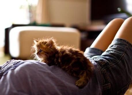 Обои Котенок лежит на девушке, фотограф Ben Torode / Бэн Тороде