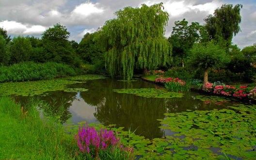 Обои Пруд с кувшинками, цветы и деревья в парке
