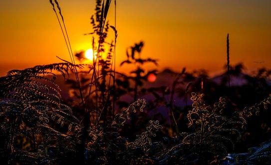 Обои Вид на закат солнца сквозь траву, фотограф Alessandro Pampolini