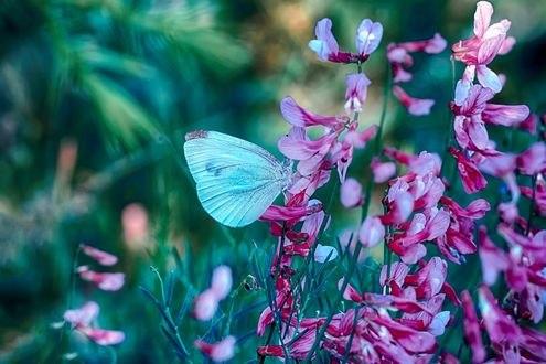 Обои Бабочка сидит на цветке, фотограф Mustafa Оzturk