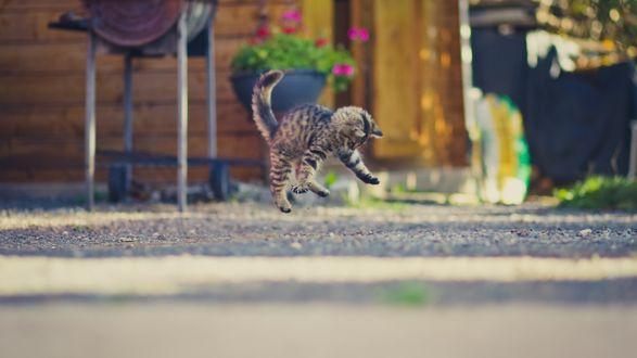 Обои Полосатый серый котенок прыгает на мостовой возле дома