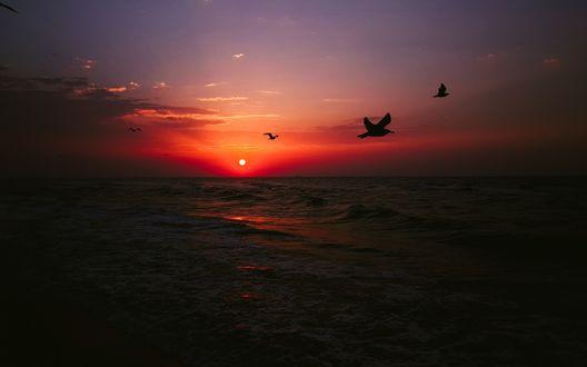 Обои Летят птицы на фоне моря и красного заката, надвигается темнота