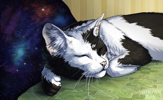 Обои Спящий черно-белый кот на фоне космоса, by Cat-Patrisiya