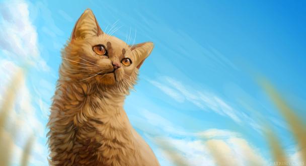 Обои Рыжий кот на фоне голубого неба, by Cat-Patrisiya