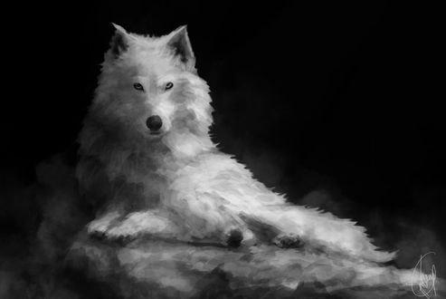 Обои Белый волк на черном фоне