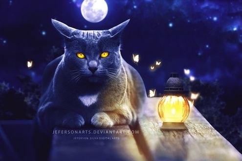Обои Кот лежит рядом с баночкой и летающими мотыльками, на фоне полной луны, by JefersonArts