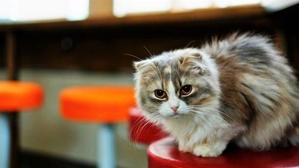 Обои Пятнистая кошка на размытом фоне