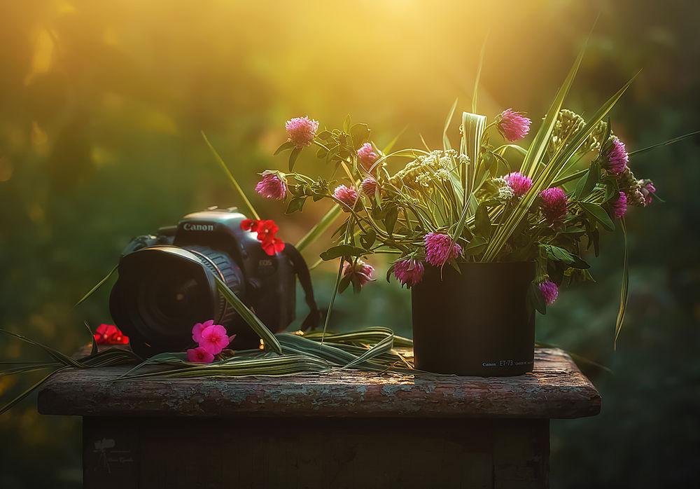 Обои для рабочего стола Букетик цветов клевера и фотоаппарат на старом табурете, фотограф Инна Сухова