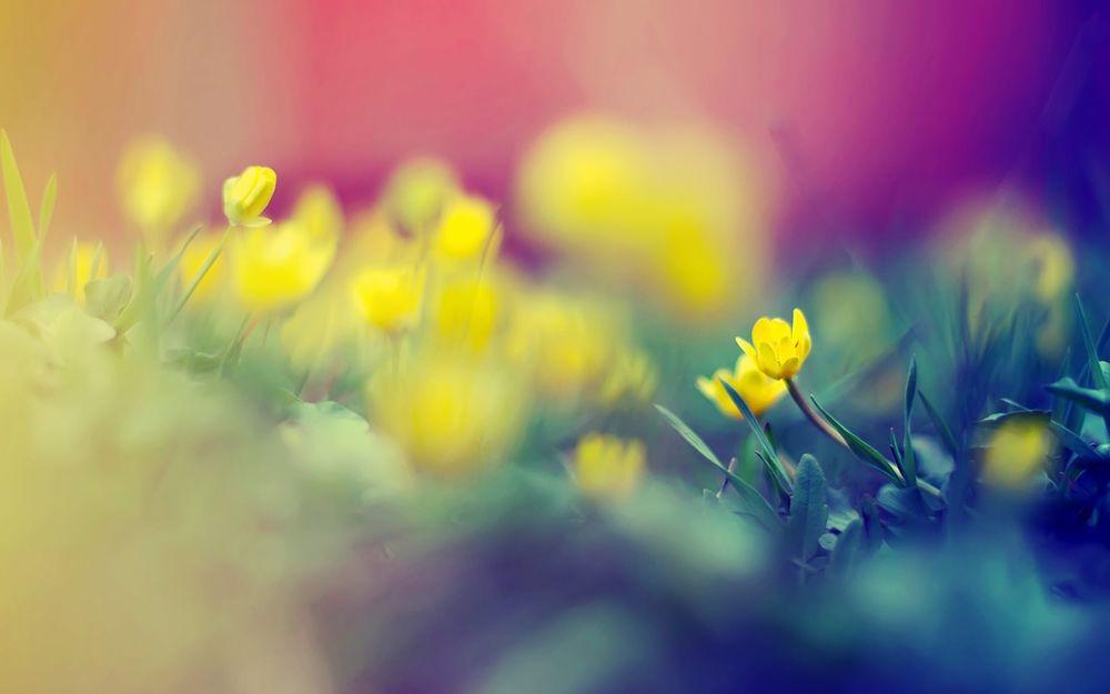 Обои для рабочего стола Маленькие желтые цветы в траве