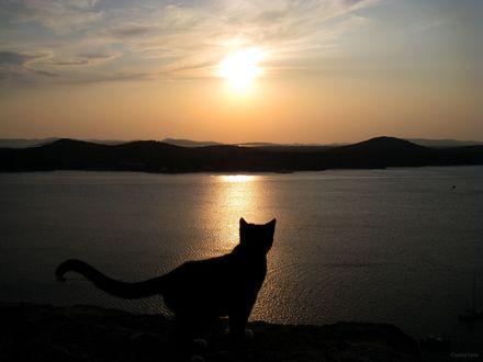 Обои Котик на закате солнца