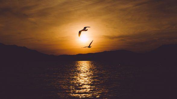 Обои Чайки в закатном небе над морем