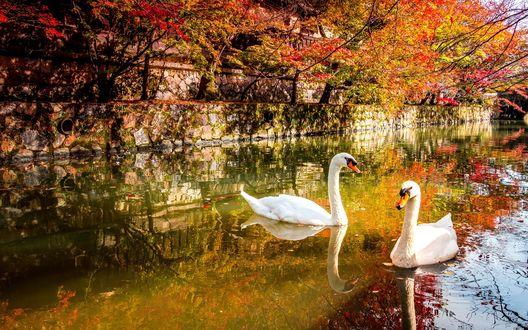 Обои красивые осень птицы (10 обоев) на рабочий стол