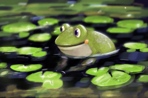 Обои Лягушка в воде