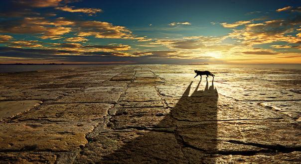 Обои Кот и его тень на мостовой, фотограф Anna Ovatta