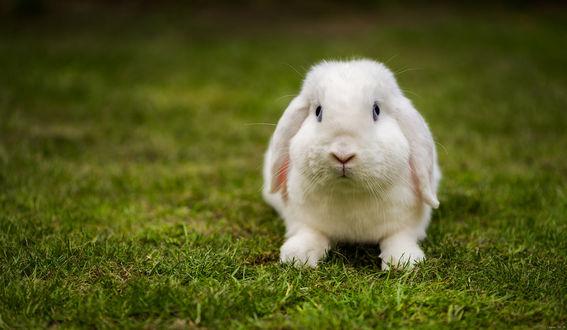 Обои Кролик сидит на траве, by EncroVision
