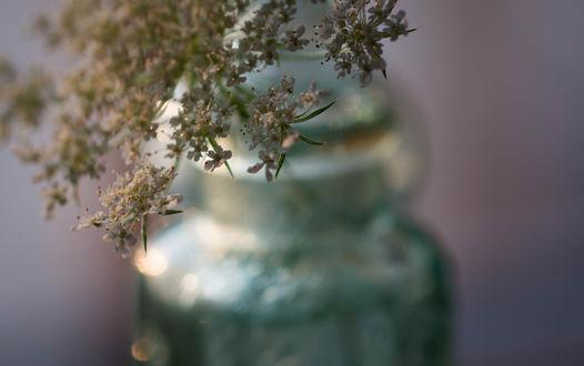 Обои Баночка с цветами, фотограф Julie Jablonski