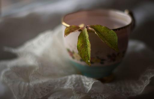 Обои Листочек в чашке, стоящей на салфетке, фотограф Julie Jablonski
