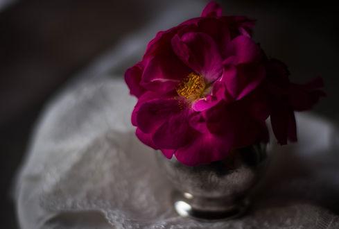 Обои Бордовая роза в вазочке, фотограф Julie Jablonski