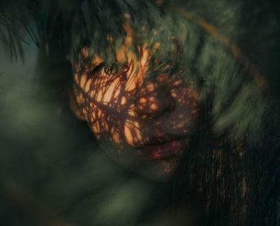 Обои Портрет девушки за зеленой веткой, фотограф Taya Iv