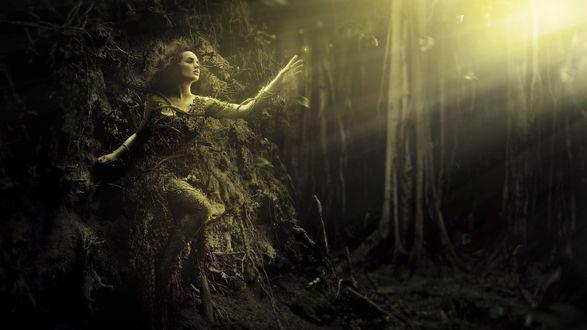 Обои Девушка вросшая в дерево тянется к лучам солнца