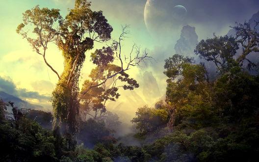 Обои Деревья и горы в тумане на фоне планет