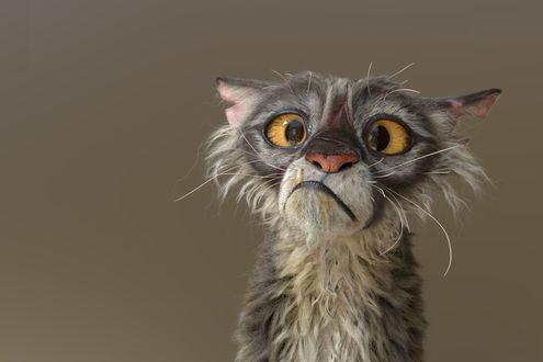 Обои Кот с желтыми глазами корчит морду, by Yannick Vincent