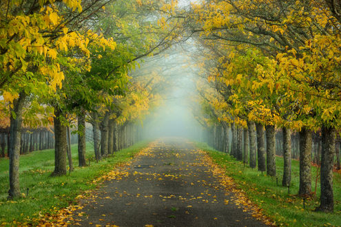 Обои Аллея ранней осенью, фотограф Dylan Toh & Marianne