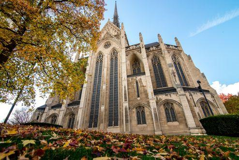 Обои Готический собор осенью под голубым небом на траве, засыпанной желтыми листьями с деревьев
