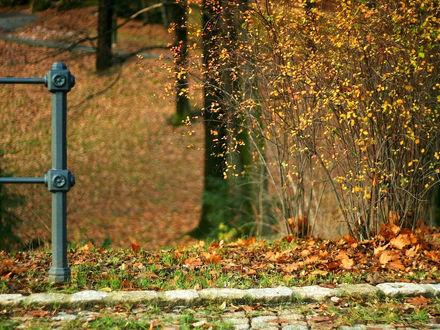 Обои Фрагмент ограды, куста и тротуара в опавших желтых листьях осенью