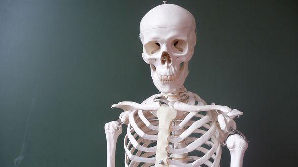 Обои Белый скелет на сером фоне