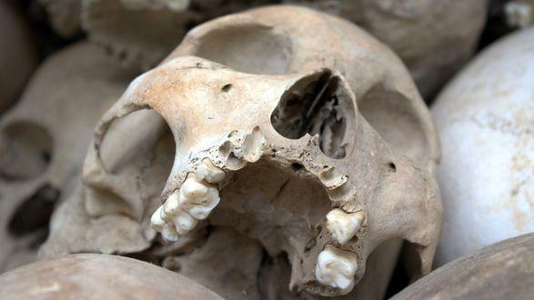 Обои Один череп из груды других. Фрагмент стены храма Костница в Седлеце