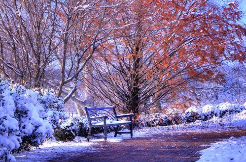 Обои Деревья в желтых осенних листьях под первым снегом поздней осенью / ранней зимой на аллее со скамейкой в парке, фотограф Mary Radike Smith
