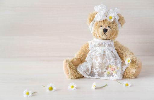 Обои Бежевый мишка в белом гипюровом платье и бантом на голове сидит рядом с цветками ромашек