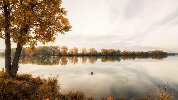 Обои Осенние желтые деревья и белое небо, отраженные в воде