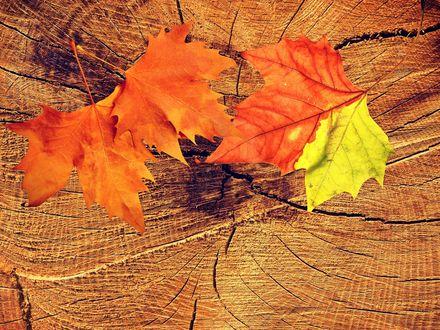 Обои Осенние листья лежат на пеньке