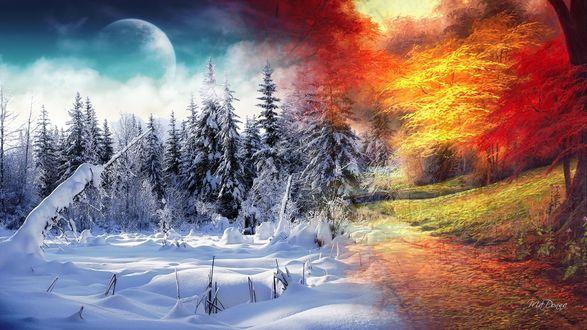 Обои Смена времен года, лета и зимы. Деревья под снегом и под солнцем