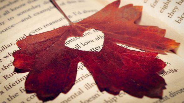 Обои Красный кленовый лист с дыркой в виде сердца на книге