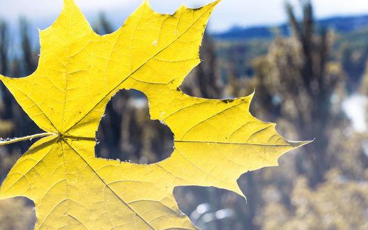 Обои Желтый лист с дыркой в виде сердечка на фоне долины
