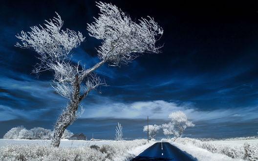 Обои Белое дерево, трава и дорога под синим небом