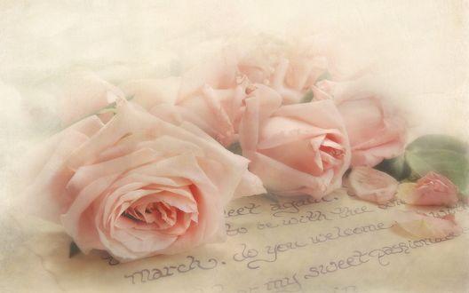 Обои Розовые розы на письме