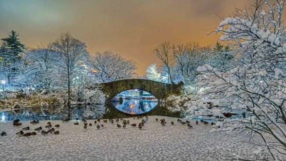 Обои Зимний вечер. Мост через реку под желтым небом и деревья в снегу в Центральном парке Nowy Jork, USA / Нью-Йорк, США