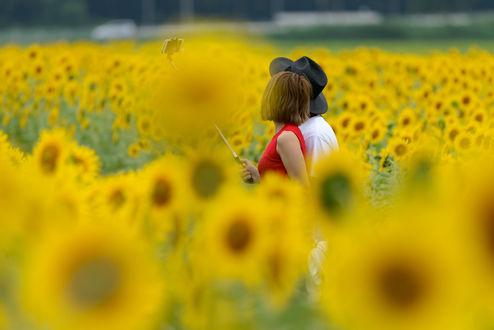 Обои Парень с девушкй стоят в поле подсолнухов, фотограф Hiroshi Ohyama