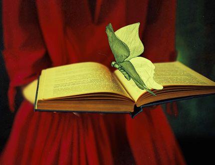 Обои Девушка в красном платье держит книгу с бабочкой, фотограф Nora Drugan